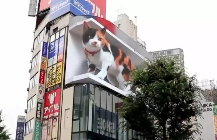 新宿车站巨猫